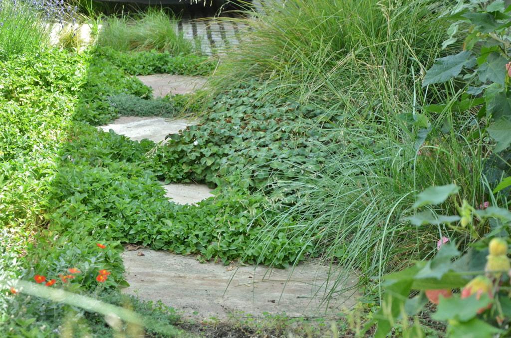 Mariposa Gardening & Design - Blog on