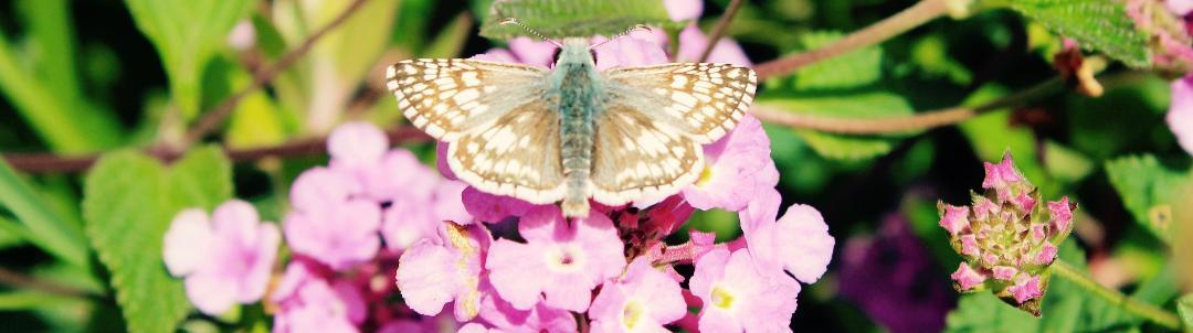 Mariposa Gardening & Design - Blog